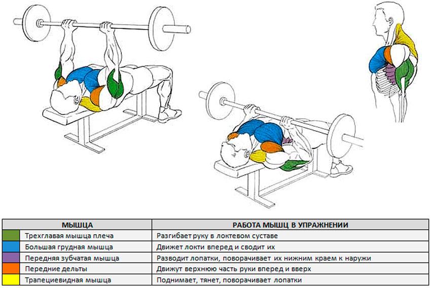 Какие мышцы работают при жиме узким хватом