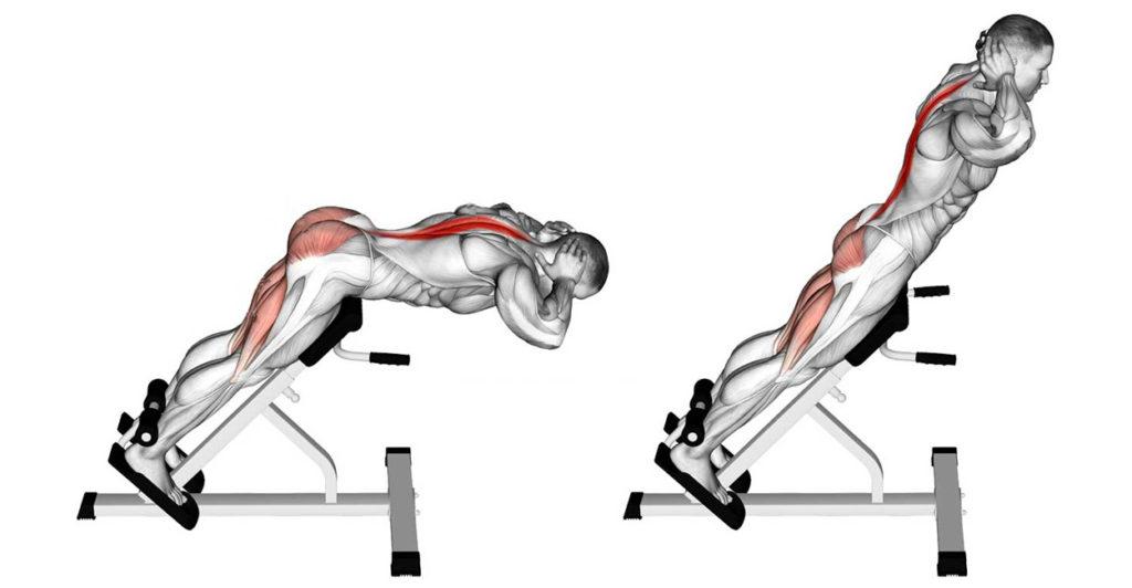 гиперэкстензия какие мышцы работают