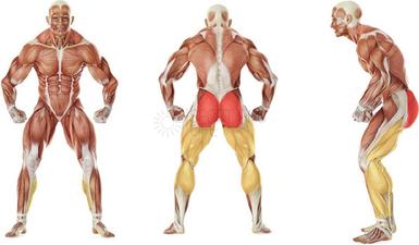 Подъем ягодиц со штангой какие мышцы работают