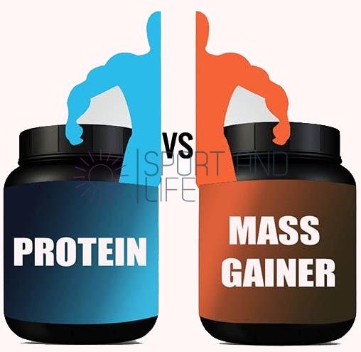 Протеин и гейнер разница