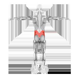 Выпрямляющие мышцы позвоночника