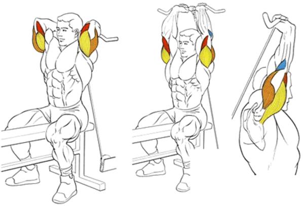 Разгибание гантели из-за головы какие мышцы работают