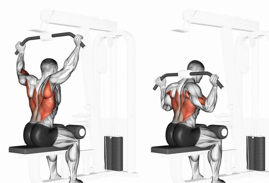 Тяга верхнего блока за голову какие мышцы работают