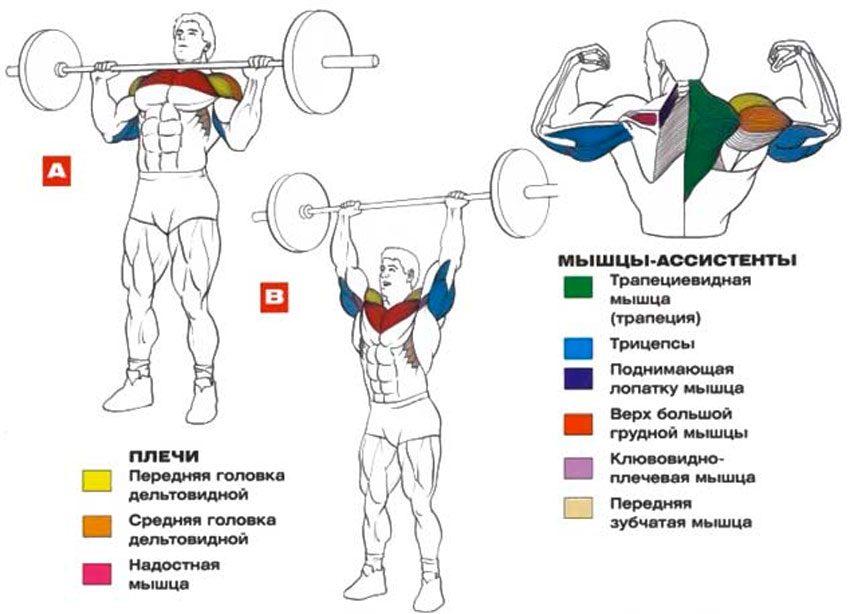 армейский жим мышцы