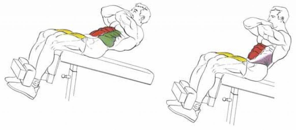 Скручивание на наклонной скамье работающие мышцы