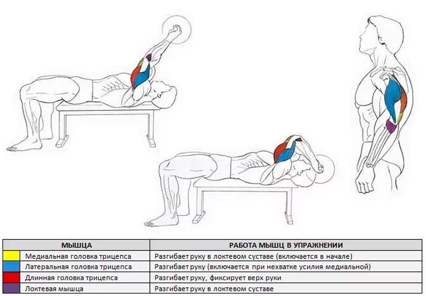 французский жим какие мышцы работают