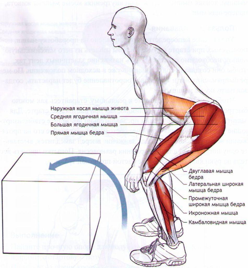 Запрыгивание на тумбу мышцы