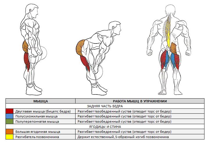 Румынская становая тяга мышцы