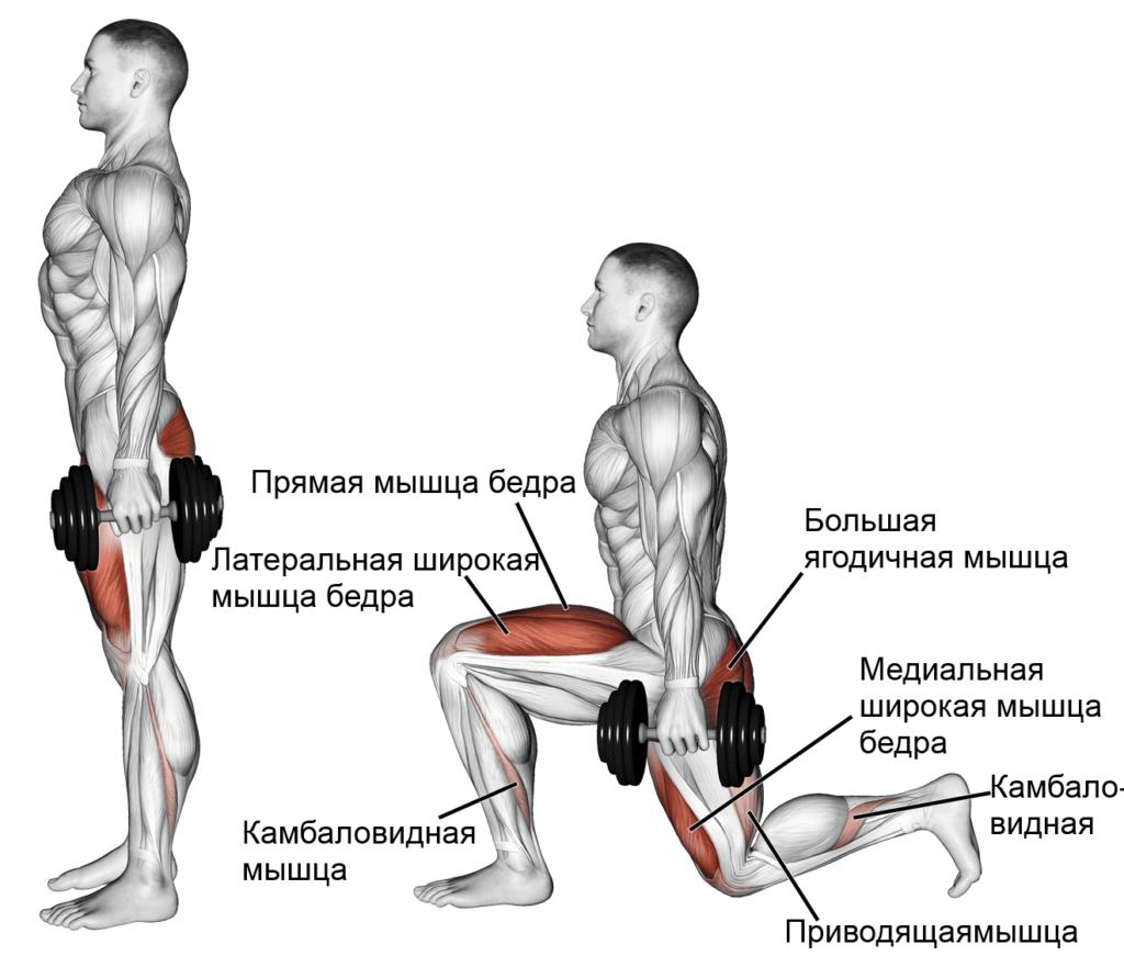Выпады мышцы