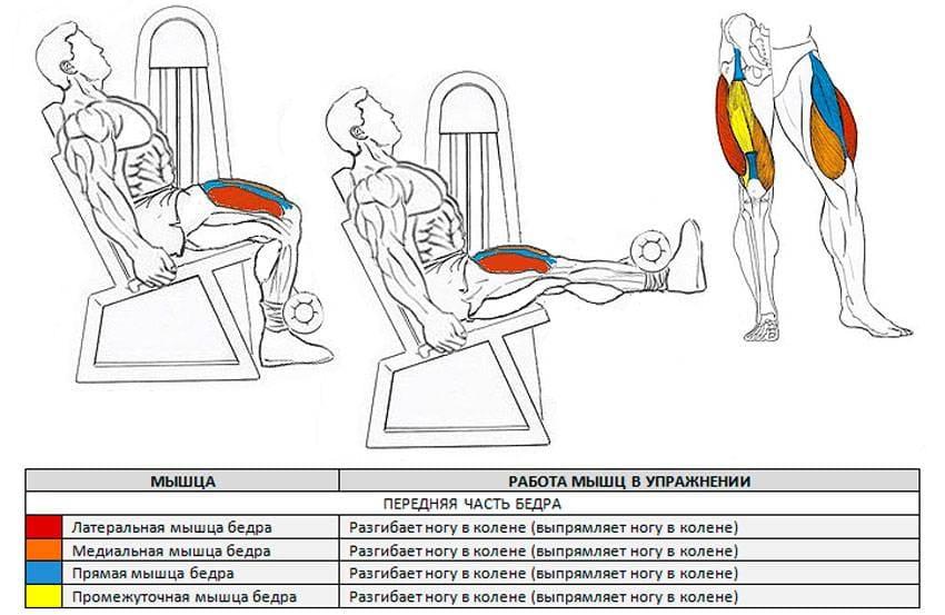 Разгибание ног в тренажере мышцы