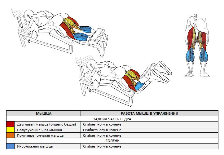 работающие мышцы при сгибание ног лежа