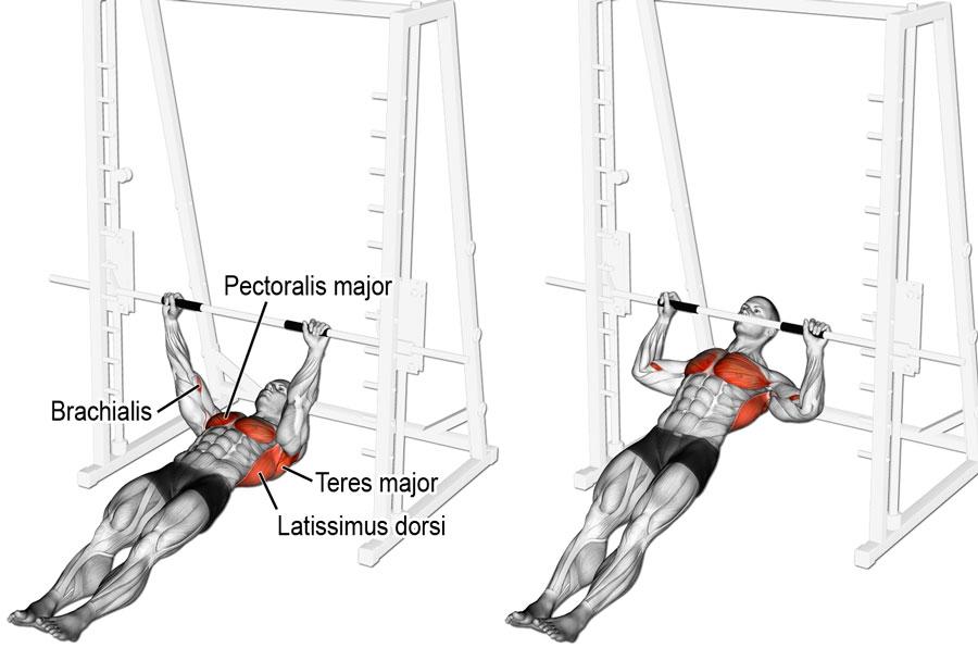 Австралийские подтягивания мышцы